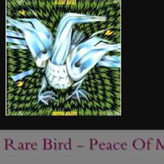 Rare Bird - Topic