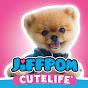 Jiffpom video