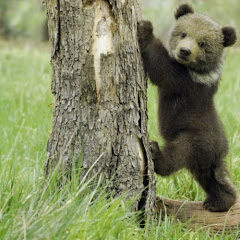 GrizzlyJR