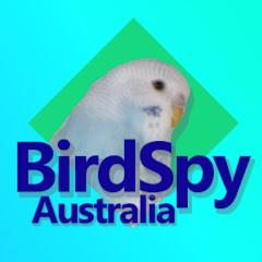 Bird Spy Australia (bird-spy-australia)