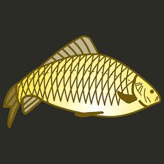 Рейтинг youtube(ютюб) канала Salapin.ru Рыбалка - образ жизни
