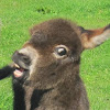 electricdonkey