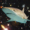 spacesharkz