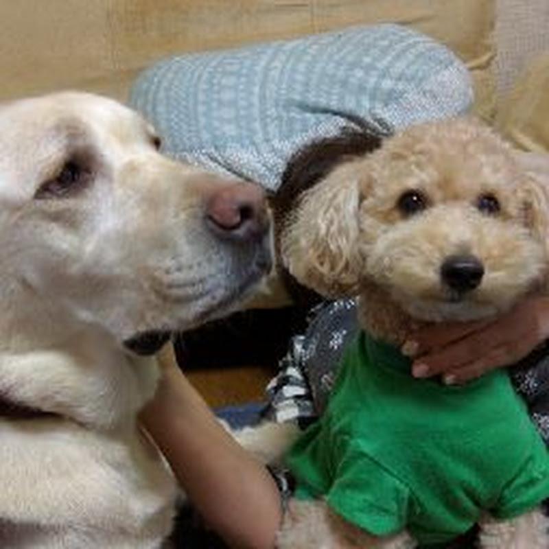 Capsule Thomas