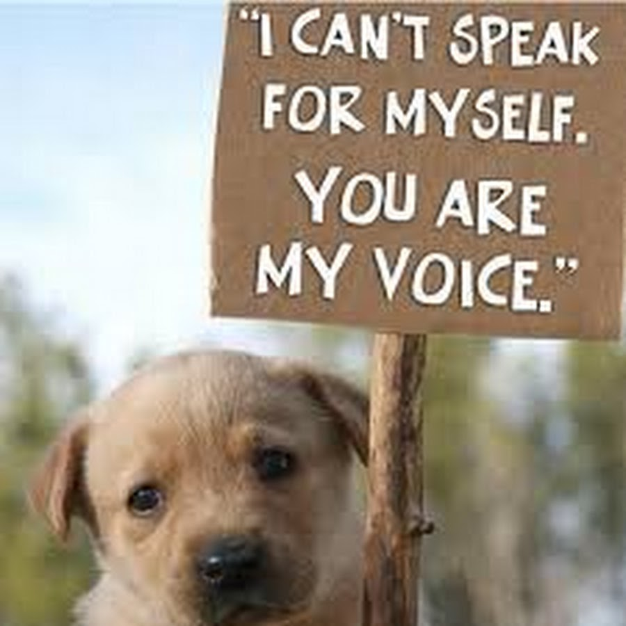Animal Cruelty Quotes Charlie Ullrich  Youtube