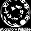 WildMigrationNetwork