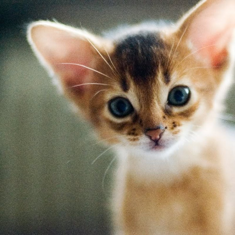 Симпатичные и милые маленькие котята (31 Фото)