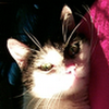 Elmer Cat
