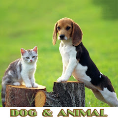 Dog & Animal