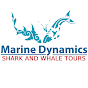 MarineDynamics Shark Tours