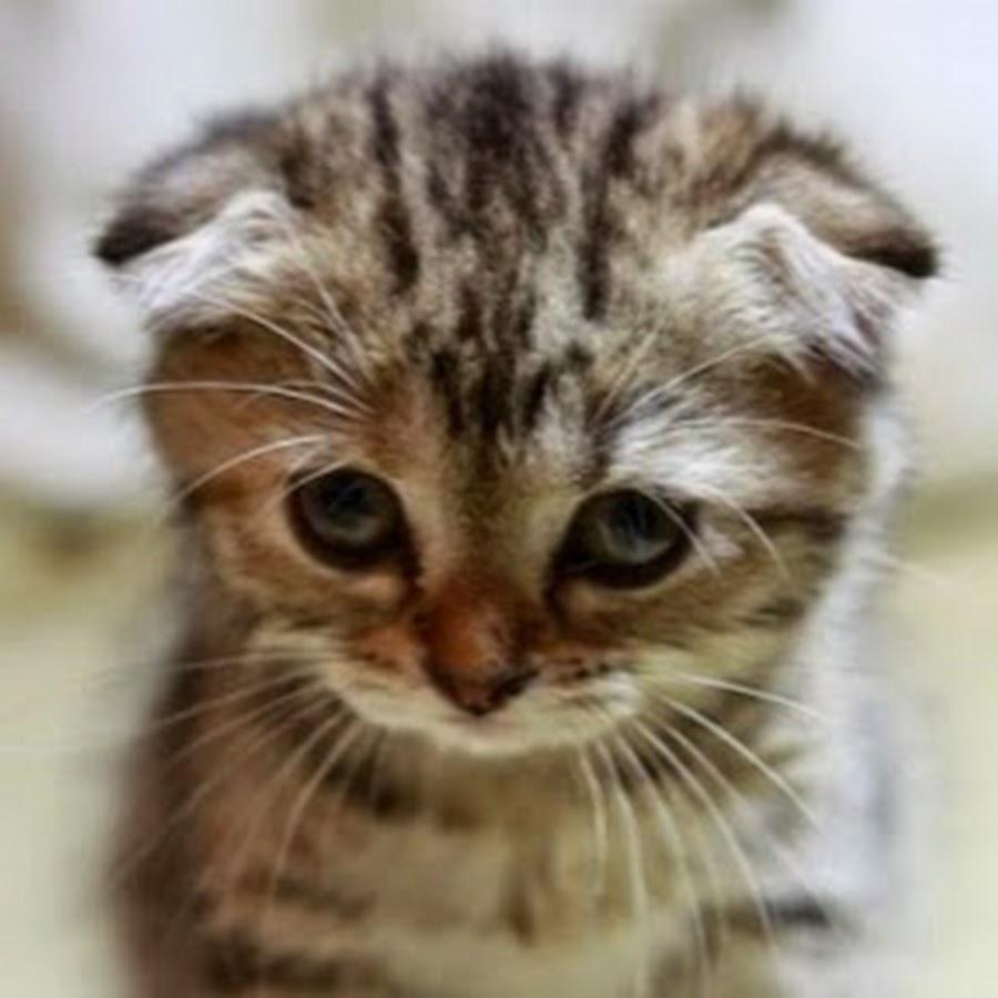 video för katter