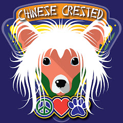 Chinese Crested Lovers