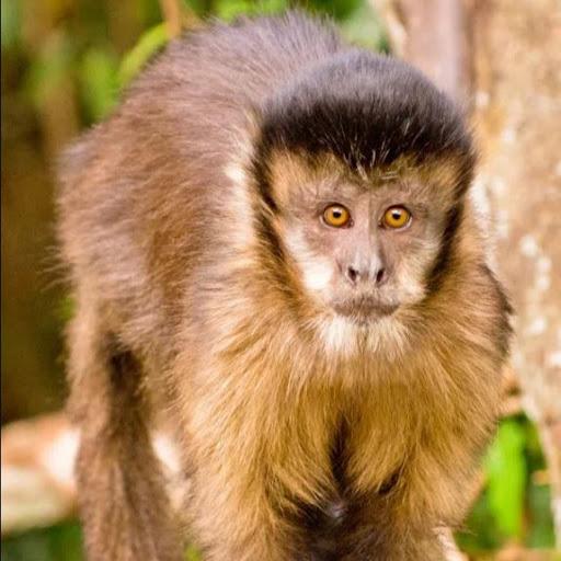 Joseph Mendes