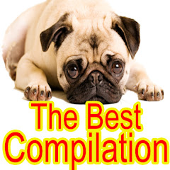 The Best Compilation TV