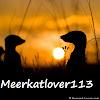meerkatlover113