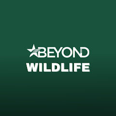 Eyewitness - Official Channel