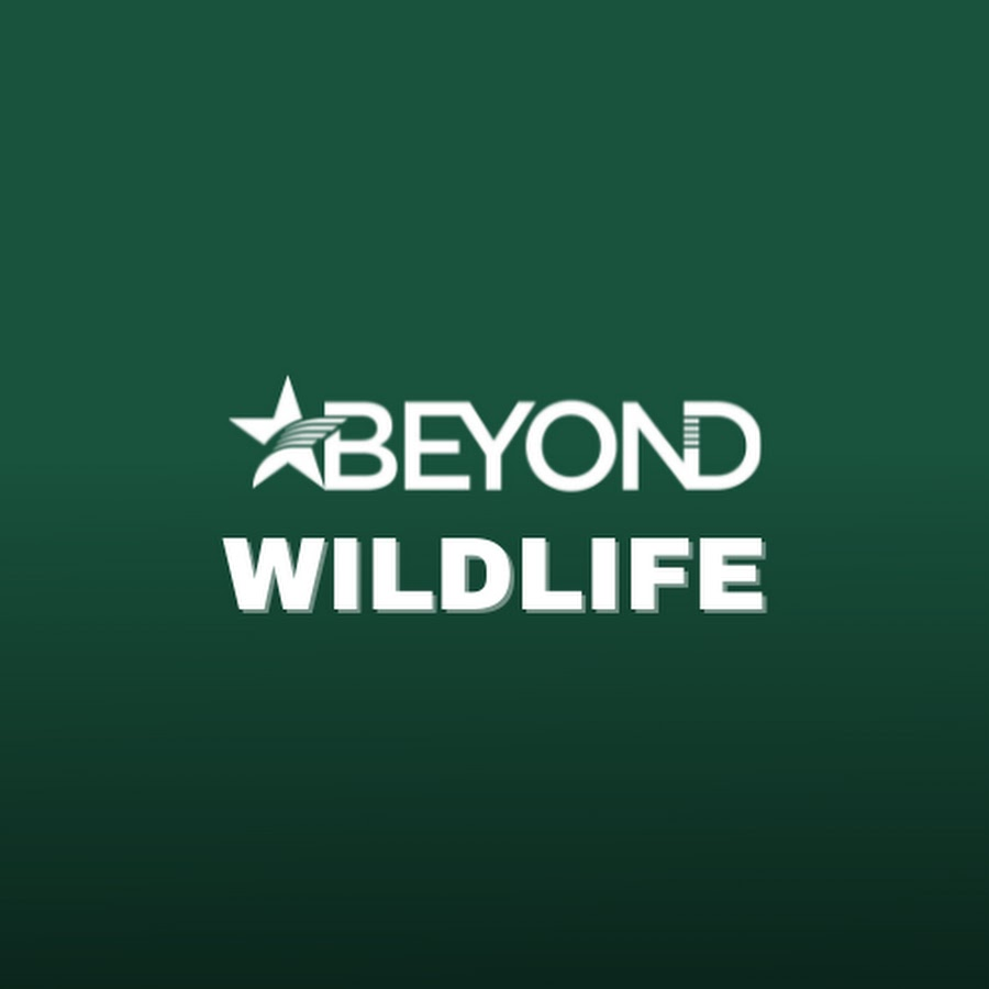 Image result for image of an eyewitness