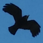 RavenHouseMystery