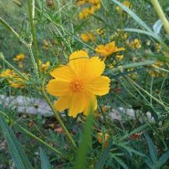 Cover Profil Nurasih Lawati