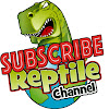 Reptile Channel