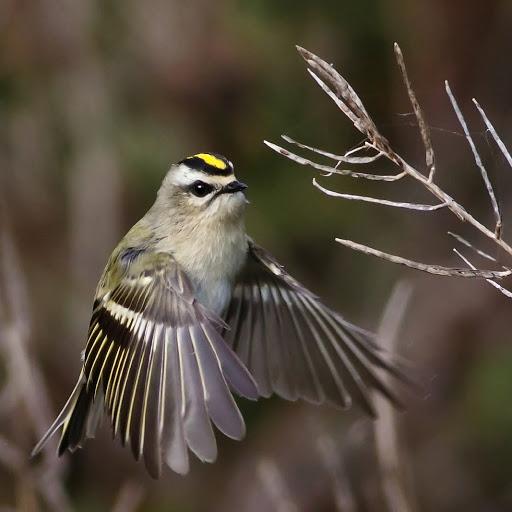 Birdingandmore