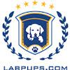LabPups.com