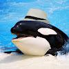 Fedora Whale