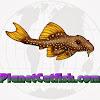PlanetCatfish TV