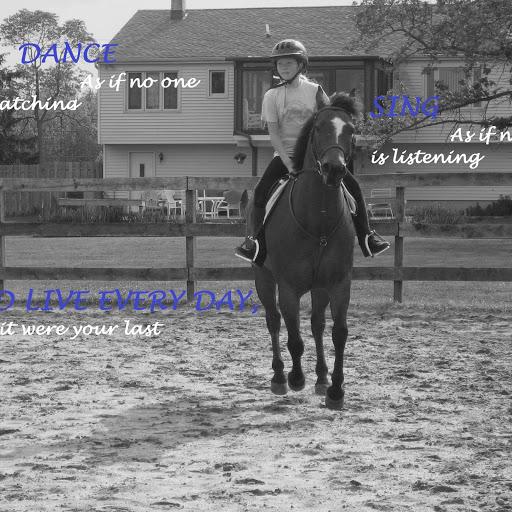 horsesnponiesforever
