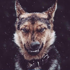 Joni Majorka Game Channel