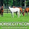 HorseCity