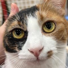 《あつし》 Channel