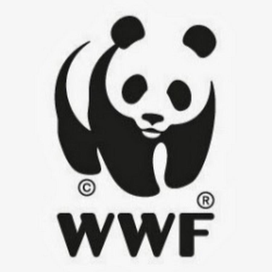 Wereld Natuur Fonds   YouTube