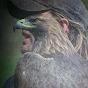 Syrian buzzard