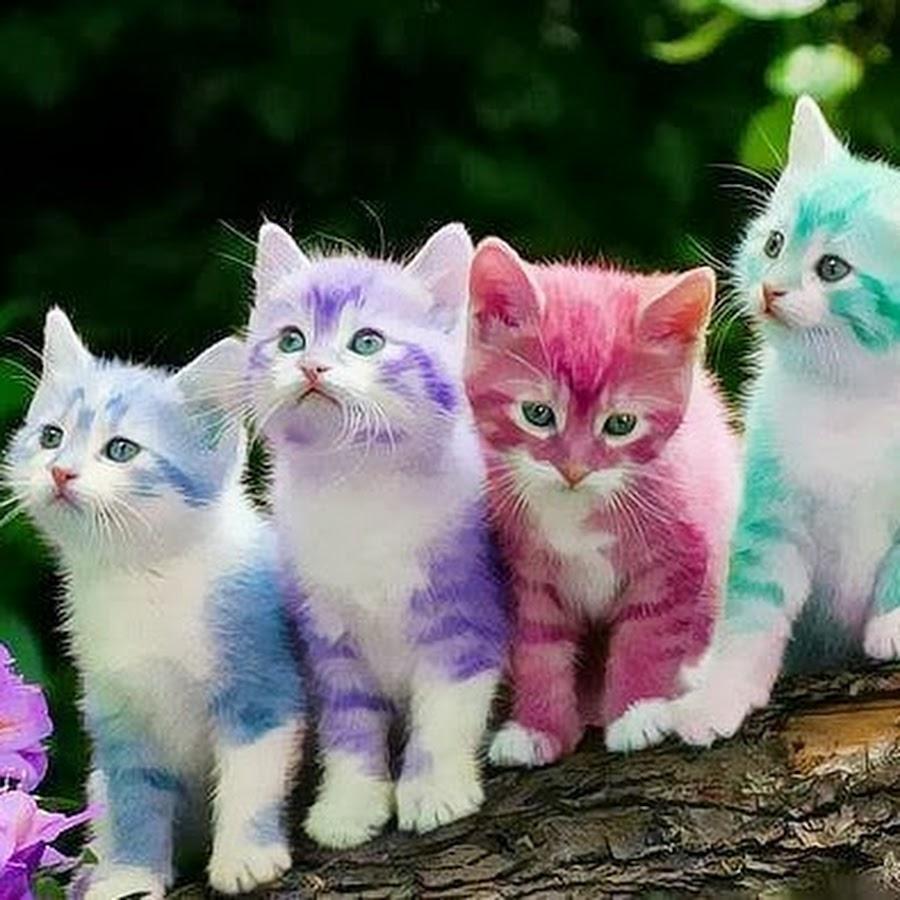 Puppies Kitties - YouTube