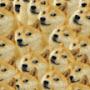 DOGE™