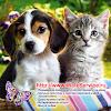 WalkService - всё о животных, дрессировка собак, кошки...
