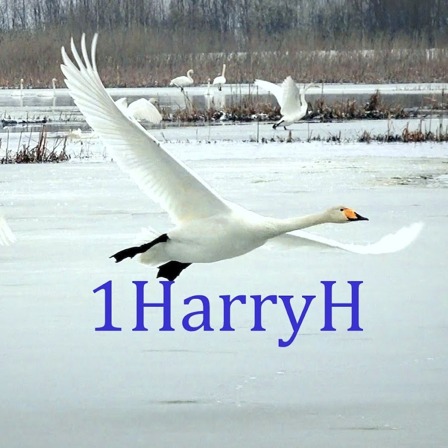 1harryh youtube