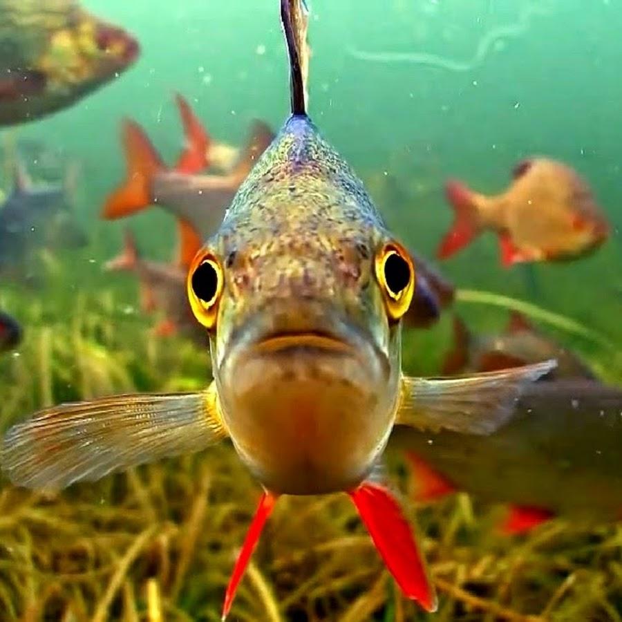воблеры под водой