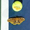 tennis 24/7