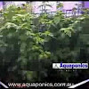 AquaponicsAustralia
