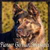 Long Coat German Shepherds