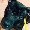 Winnebago County Animal Services