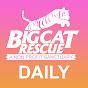 DailyBigCat