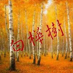 BaiHuaShu白樺樹