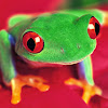 Red Treefrog Breyers