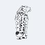 Snow Leopard Trust