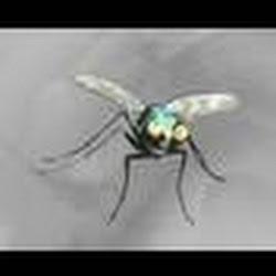 subtlefly