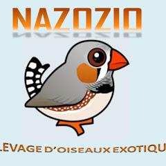 nazozio - élevage oiseaux exotiques