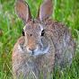 Momma Rabbit